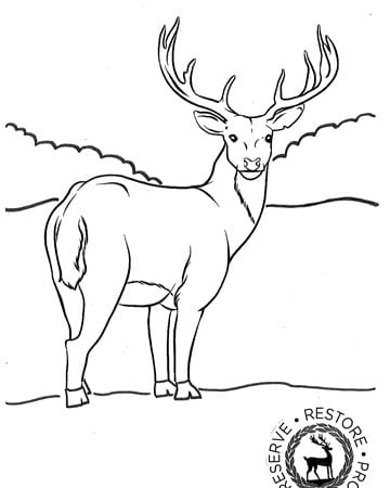 stag image