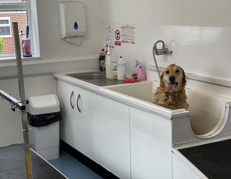 Warley Cross Kennels and Cattery - Bath_Time