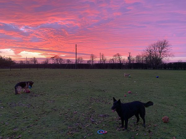 Warley Cross Kennels and Cattery Playing_Field_Sunset